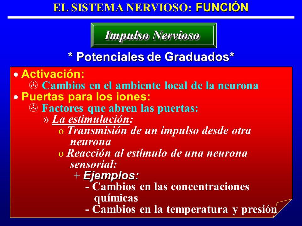 FUNCIÓN EL SISTEMA NERVIOSO: FUNCIÓN * Potenciales de Graduados* Impulso Nervioso Activación: Cambios en el ambiente local de la neurona Puertas para