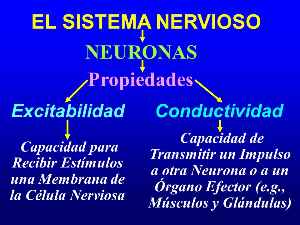 EL SISTEMA NERVIOSO Propiedades Excitabilidad NEURONAS Conductividad Capacidad para Recibir Estímulos una Membrana de la Célula Nerviosa Capacidad de