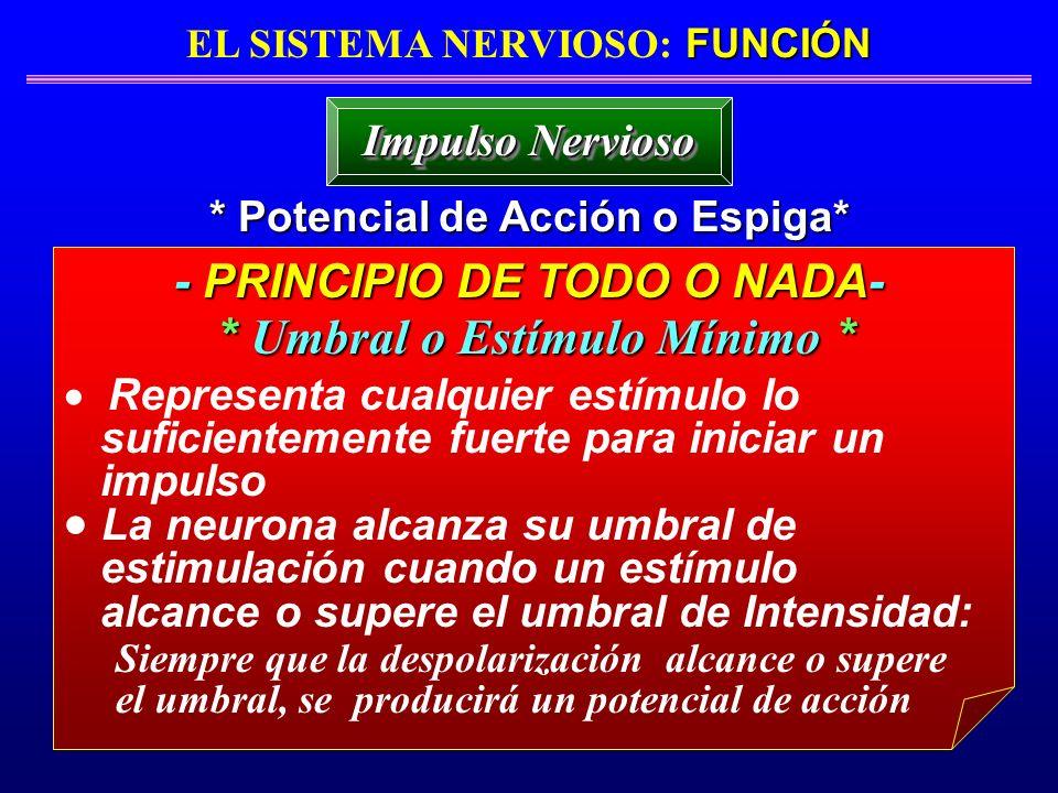 FUNCIÓN EL SISTEMA NERVIOSO: FUNCIÓN * Potencial de Acción o Espiga* Impulso Nervioso - PRINCIPIO DE TODO O NADA- Representa cualquier estímulo lo suf