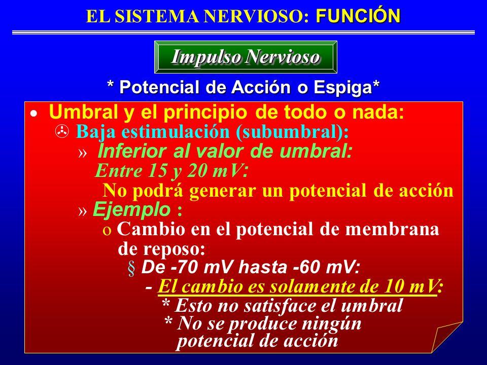 FUNCIÓN EL SISTEMA NERVIOSO: FUNCIÓN * Potencial de Acción o Espiga* Impulso Nervioso Umbral y el principio de todo o nada: Baja estimulación (subumbr