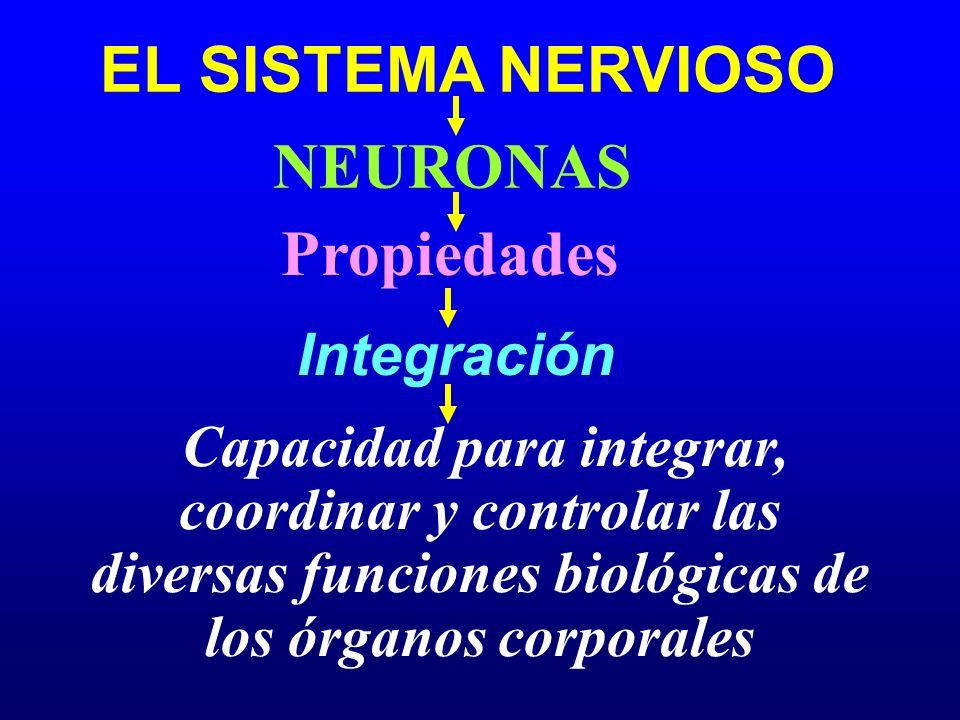 EL SISTEMA NERVIOSO Propiedades Integración NEURONAS Capacidad para integrar, coordinar y controlar las diversas funciones biológicas de los órganos c