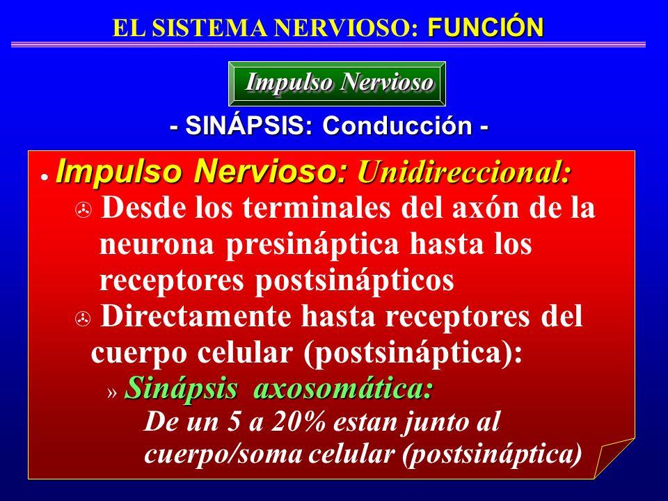 FUNCIÓN EL SISTEMA NERVIOSO: FUNCIÓN - SINÁPSIS: Conducción - Impulso Nervioso Impulso Nervioso: Unidireccional: > Desde los terminales del axón de la