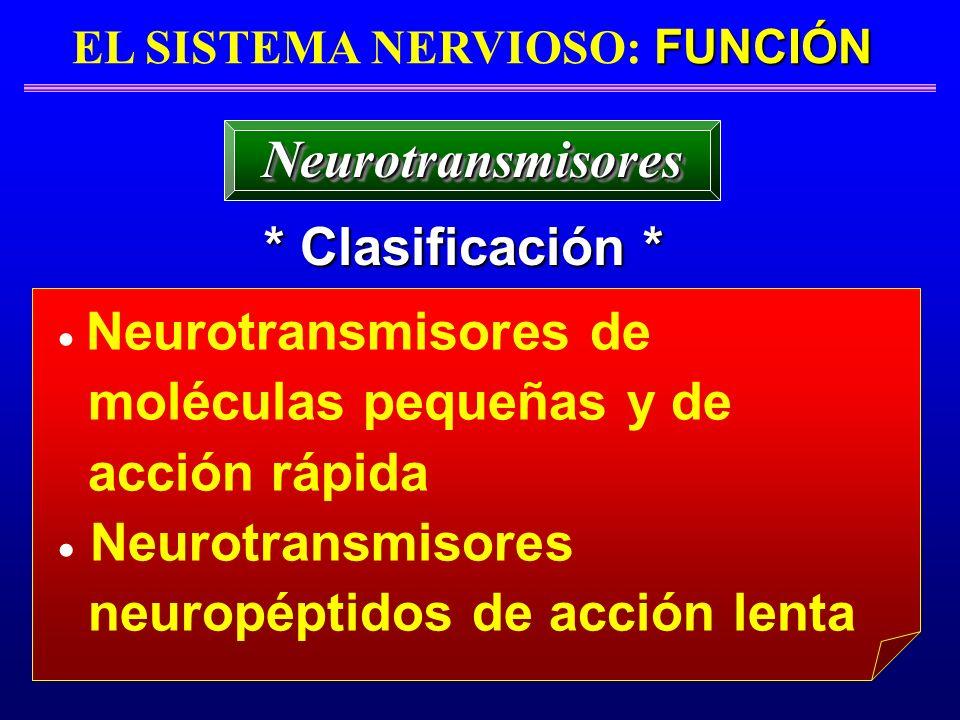 FUNCIÓN EL SISTEMA NERVIOSO: FUNCIÓN * Clasificación * NeurotransmisoresNeurotransmisores Neurotransmisores de moléculas pequeñas y de acción rápida N