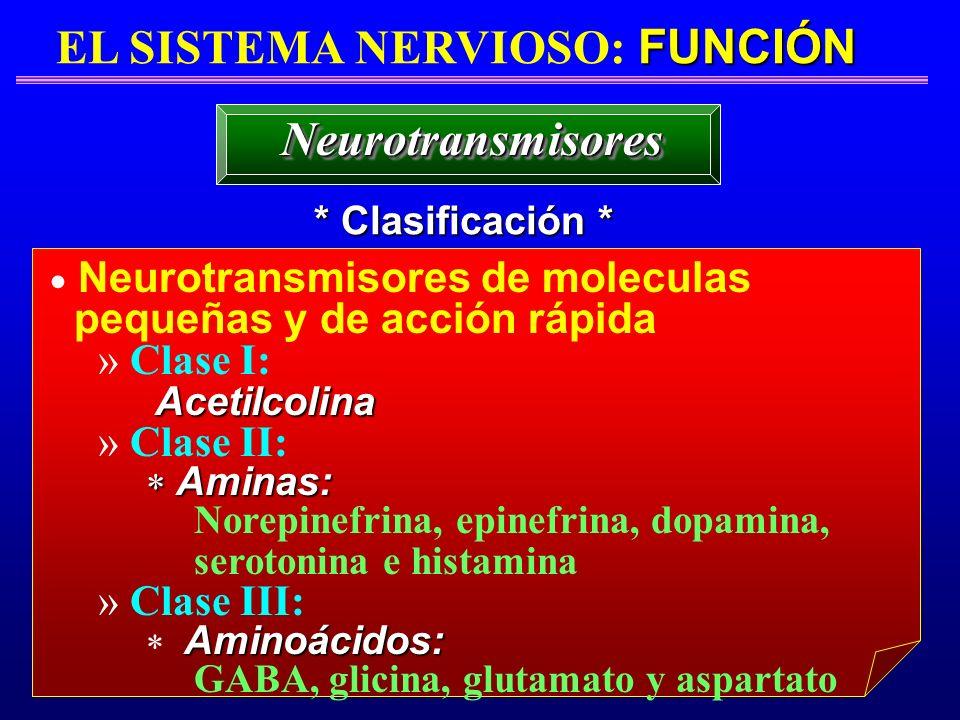 FUNCIÓN EL SISTEMA NERVIOSO: FUNCIÓN * Clasificación * NeurotransmisoresNeurotransmisores Neurotransmisores de moleculas pequeñas y de acción rápida »