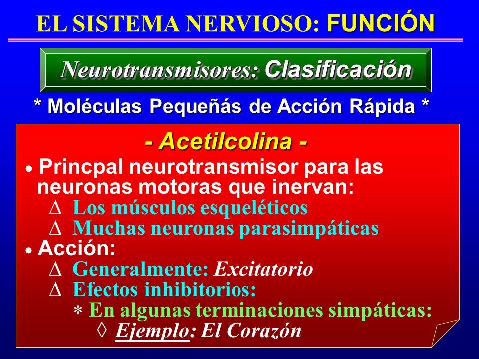 FUNCIÓN EL SISTEMA NERVIOSO: FUNCIÓN * Moléculas Pequeñás de Acción Rápida * Neurotransmisores: Clasificación Princpal neurotransmisor para las neuron