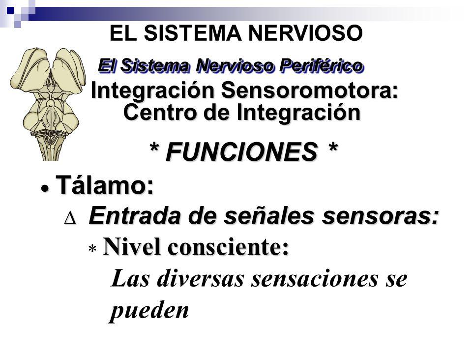 Tálamo: Tálamo: Entrada de señales sensoras: Entrada de señales sensoras: Nivel consciente: Las diversas sensaciones se pueden EL SISTEMA NERVIOSO * F
