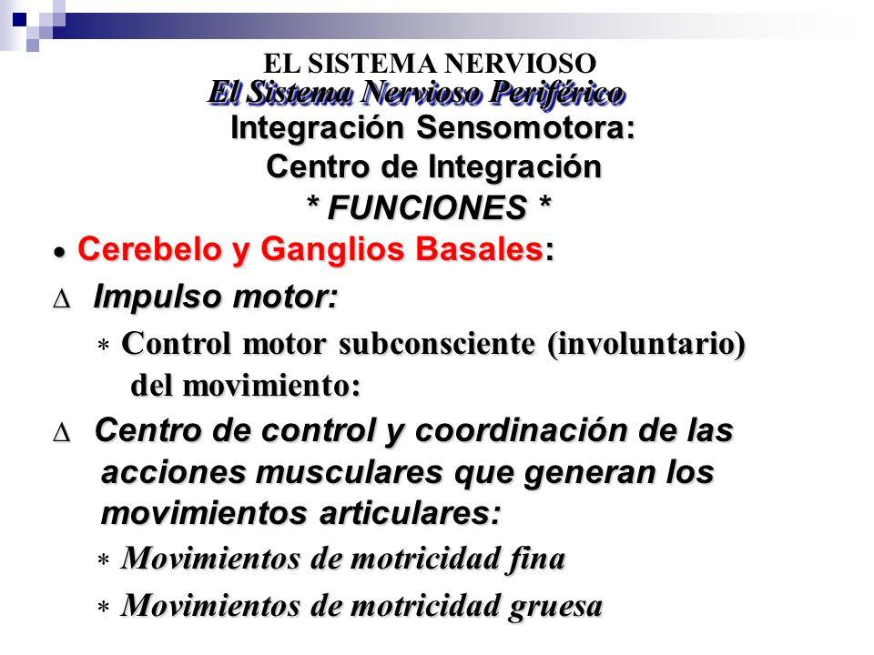 EL SISTEMA NERVIOSO Integración Sensomotora: Centro de Integración El Sistema Nervioso Periférico Cerebelo y Ganglios Basales: Cerebelo y Ganglios Bas