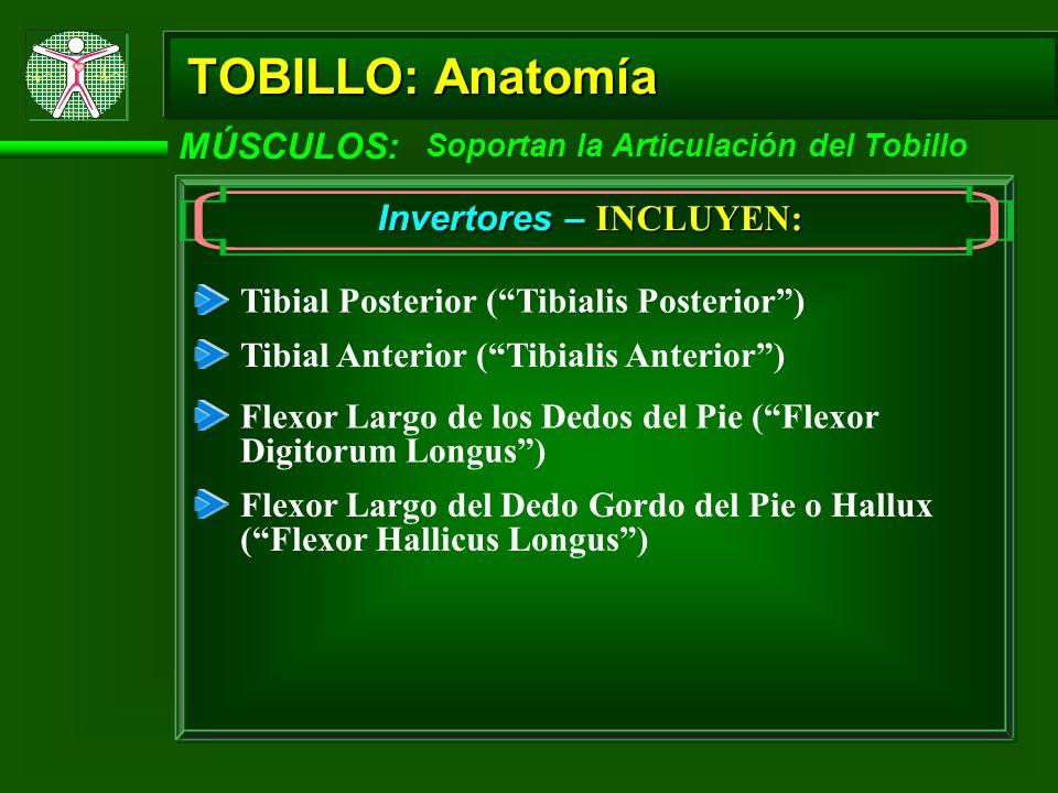 TOBILLO: Anatomía MÚSCULOS: Soportan la Articulación del Tobillo Invertores – INCLUYEN: Tibial Posterior (Tibialis Posterior) Tibial Anterior (Tibiali