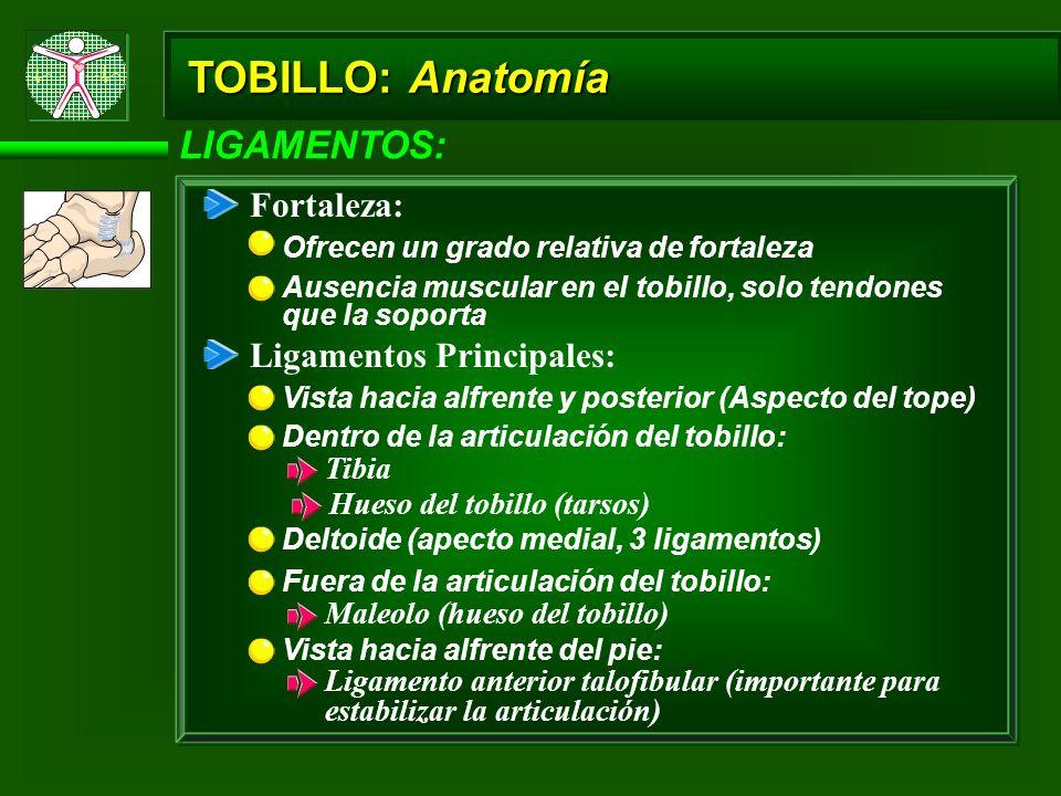 TOBILLO: Anatomía LIGAMENTOS: Aspecto lateral: Tibiofibular (tibioperoneo) anterior Talofibular (peroneoastragalino) anterior Talocalcáneo lateral Calcaneofibular Aspecto Medial: El deltoide Aspecto Posterior: Talotibial (tibioastragalino) posterior (deltoideo) Talocalcánea (astragalocalcánea) posterior Aspecto Inferior (Planta del Pie): Gran ligamento planar Ligamento plantar calcaneoescafoides