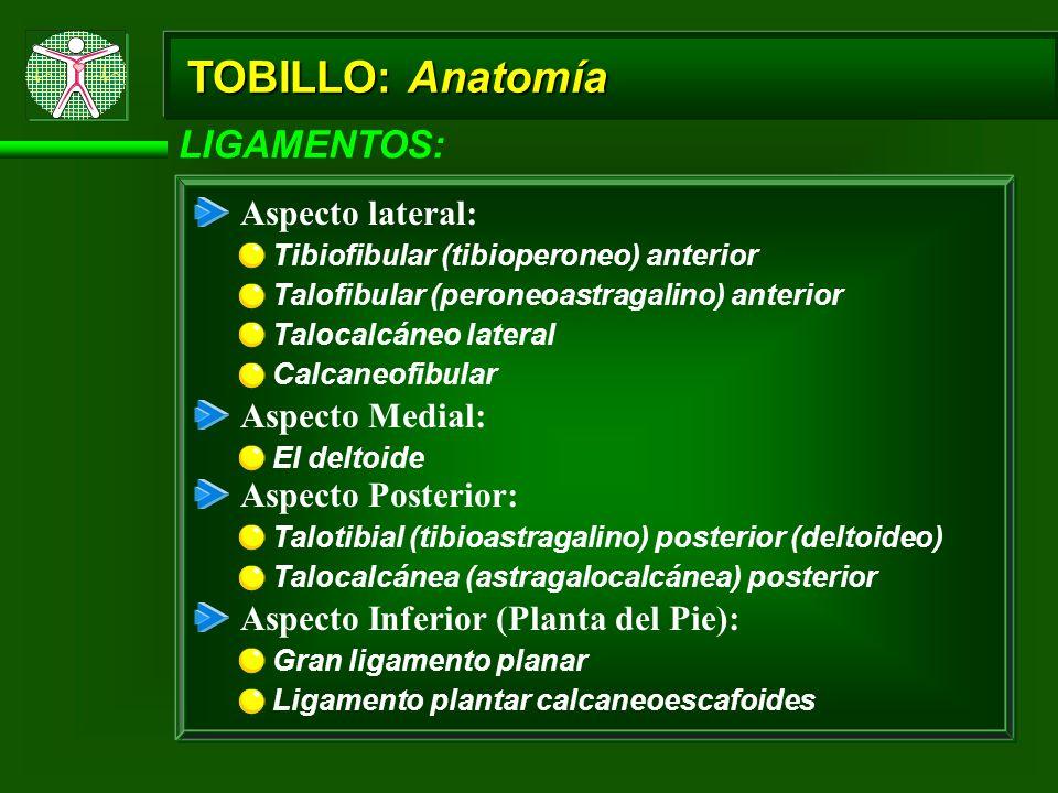 TOBILLO: Anatomía LIGAMENTOS: Aspecto lateral: Tibiofibular (tibioperoneo) anterior Talofibular (peroneoastragalino) anterior Talocalcáneo lateral Cal