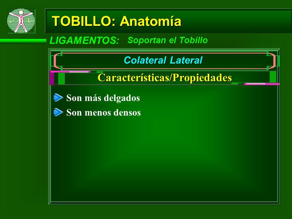TOBILLO: Anatomía LIGAMENTOS: Soportan el Tobillo Colateral Lateral Talofibular (peroneoastragalino) anterior Talofibular (peroneoastragalino) posterior Tipos Calcaneofibular (peroneocalcáneo)