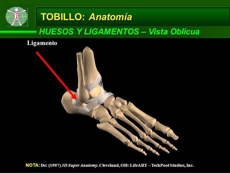 TOBILLO: Anatomía HUESOS Y LIGAMENTOS – Vista Oblicua NOTA: De: (1997) 3D Super Anatomy. Cleveland, OH: LifeART – TechPool Studios, Inc. Ligamento