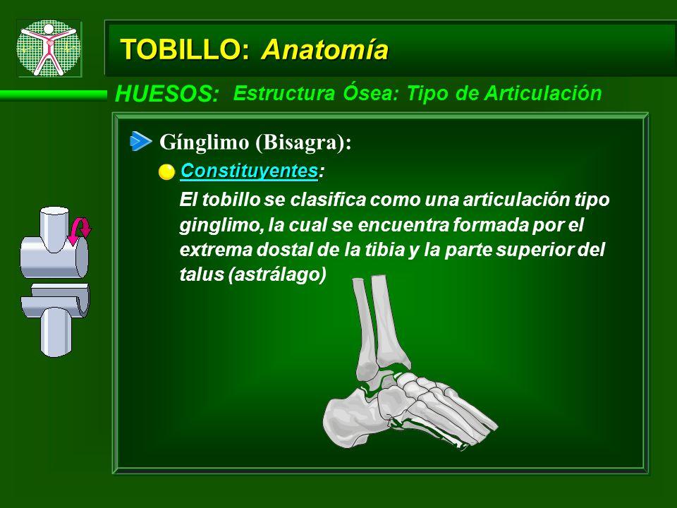 TOBILLO: Anatomía HUESOS: Estructura Ósea Extremidad Distal: Área inferior de la parte anterior de la tibia Área inferior de la parte anterior de la tibia: Es una delgada Formación Cavo: Extremo inferior de la fíbula Extremo inferior de la fíbula: Es una gruesa Ambos extremos distales de la tibia y fíbula (maleolo medial y lateral) de la pierna inferior: Estos extremos distales se encuentran unidos por los ligamentos tibiofibular anterior y posterior -Forman un efecto de cavo -Contienen el talus (astrálago) -Forman una articulación en Muesca (Mortise) -Permiten dorsiflexión y flexión plantar