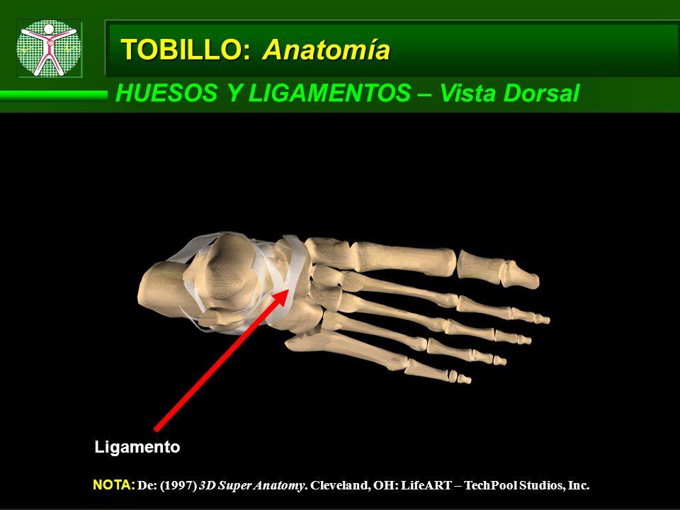 TOBILLO: Anatomía HUESOS Y LIGAMENTOS – Vista Dorsal NOTA: De: (1997) 3D Super Anatomy. Cleveland, OH: LifeART – TechPool Studios, Inc. Ligamento