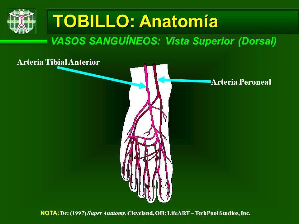 TOBILLO: Anatomía VASOS SANGUÍNEOS: Vista Superior (Dorsal) NOTA: De: (1997) Super Anatomy. Cleveland, OH: LifeART – TechPool Studios, Inc. Arteria Ti
