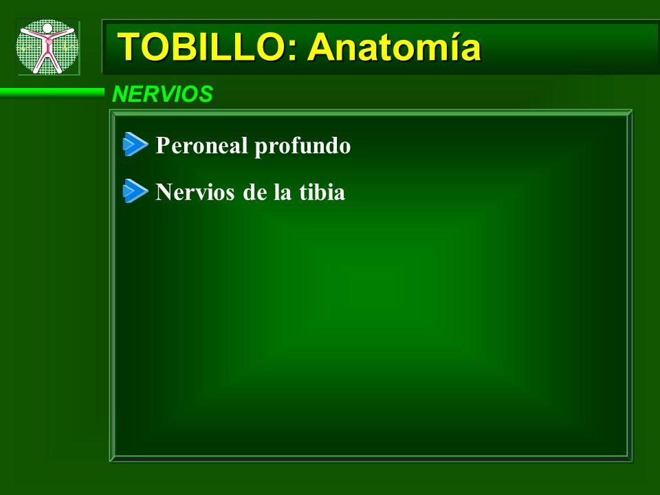 TOBILLO: Anatomía NERVIOS Peroneal profundo Nervios de la tibia