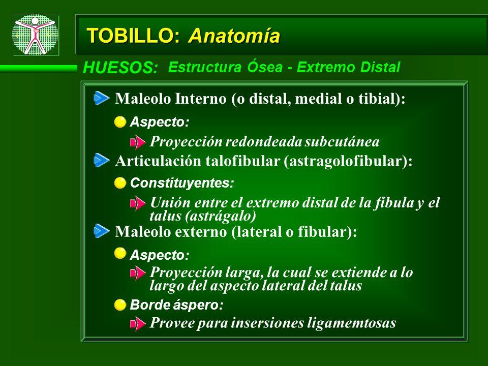 TOBILLO: Anatomía HUESOS: Estructura Ósea - Extremo Distal Maleolo Interno (o distal, medial o tibial): Aspecto: Proyección redondeada subcutánea Arti