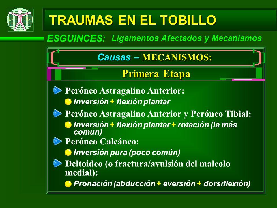 ESGUINCES: TRAUMAS EN EL TOBILLO Causas – MECANISMOS: Peróneo Astragalino Anterior: Inversión + flexión plantar Primera Etapa Ligamentos Afectados y M