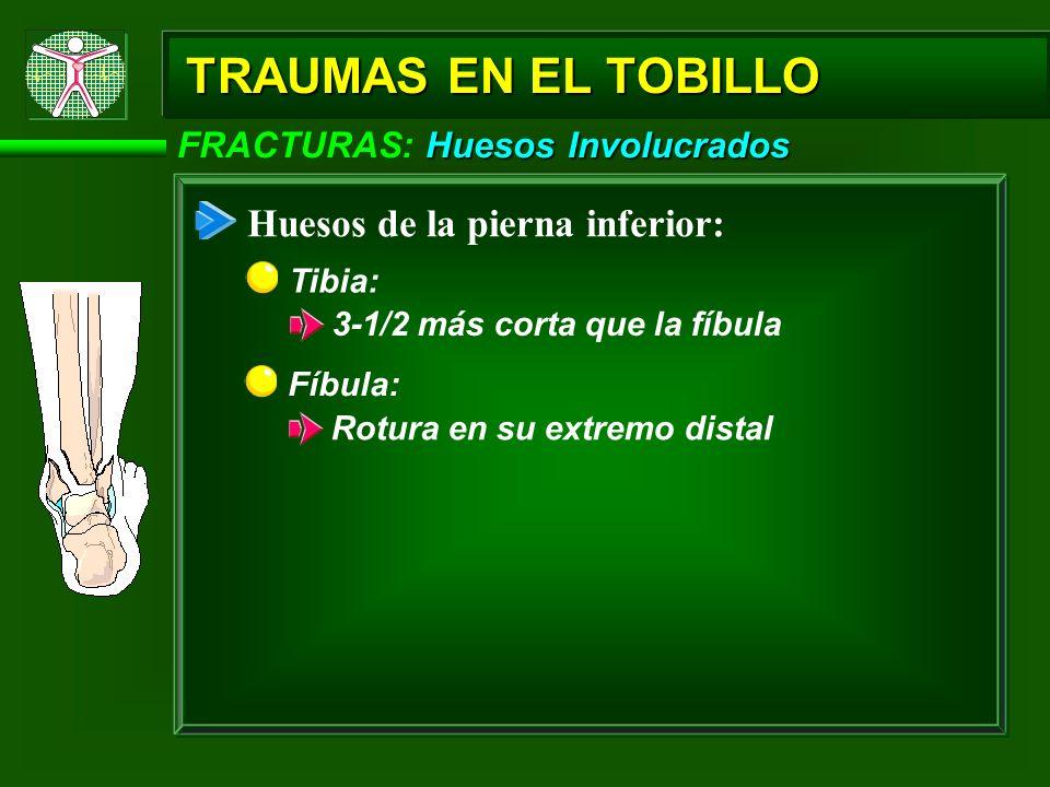 Huesos Involucrados FRACTURAS: Huesos Involucrados TRAUMAS EN EL TOBILLO Huesos de la pierna inferior: Fíbula: Rotura en su extremo distal Tibia: 3-1/