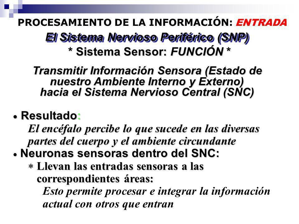 PROCESAMIENTO DE LA INFORMACIÓN: ENTRADA * Sistema Sensor: FUNCIÓN * El Sistema Nervioso Periférico (SNP) Resultado: Resultado: El encéfalo percibe lo