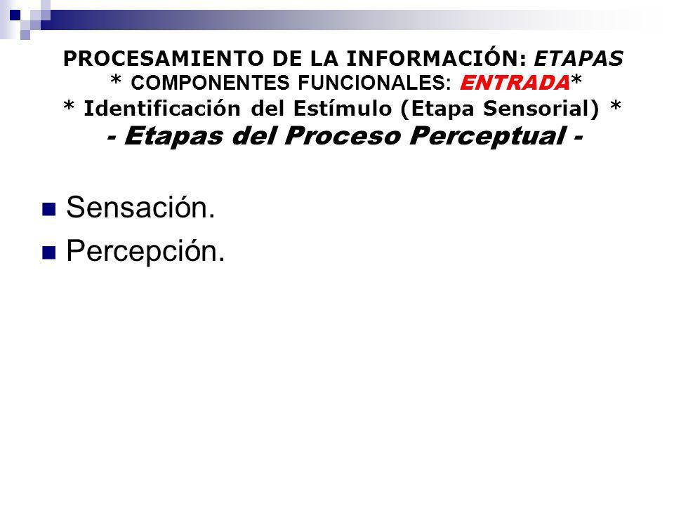 PROCESAMIENTO DE LA INFORMACIÓN: ETAPAS * COMPONENTES FUNCIONALES: ENTRADA * * Identificación del Estímulo (Etapa Sensorial) * - Etapas del Proceso Pe