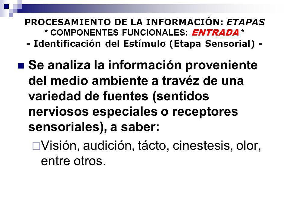 PROCESAMIENTO DE LA INFORMACIÓN: ETAPAS * COMPONENTES FUNCIONALES: ENTRADA * - Identificación del Estímulo (Etapa Sensorial) - Se analiza la informaci