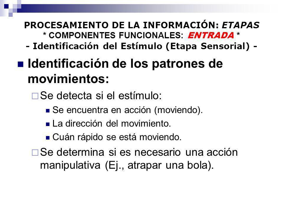 PROCESAMIENTO DE LA INFORMACIÓN: ETAPAS * COMPONENTES FUNCIONALES: ENTRADA * - Identificación del Estímulo (Etapa Sensorial) - Identificación de los p