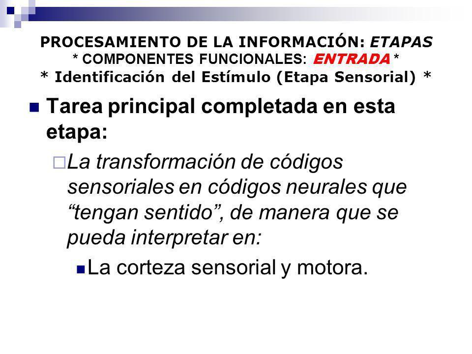 PROCESAMIENTO DE LA INFORMACIÓN: ETAPAS * COMPONENTES FUNCIONALES: ENTRADA * * Identificación del Estímulo (Etapa Sensorial) * Tarea principal complet