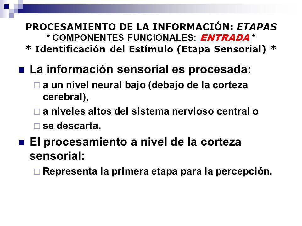 PROCESAMIENTO DE LA INFORMACIÓN: ETAPAS * COMPONENTES FUNCIONALES: ENTRADA * * Identificación del Estímulo (Etapa Sensorial) * La información sensoria