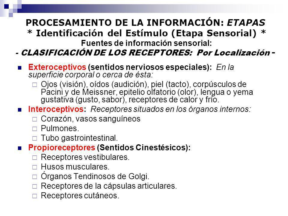 PROCESAMIENTO DE LA INFORMACIÓN: ETAPAS * Identificación del Estímulo (Etapa Sensorial) * Fuentes de información sensorial: - CLASIFICACIÓN DE LOS REC