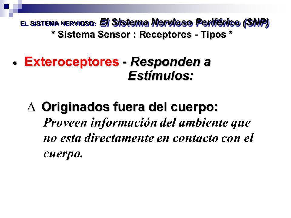 * Sistema Sensor : Receptores - Tipos * El Sistema Nervioso Periférico (SNP) EL SISTEMA NERVIOSO: El Sistema Nervioso Periférico (SNP) Exteroceptores