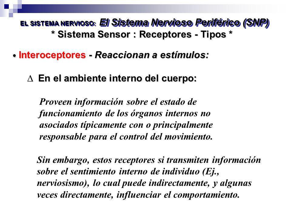 * Sistema Sensor : Receptores - Tipos * El Sistema Nervioso Periférico (SNP) EL SISTEMA NERVIOSO: El Sistema Nervioso Periférico (SNP) Interoceptores
