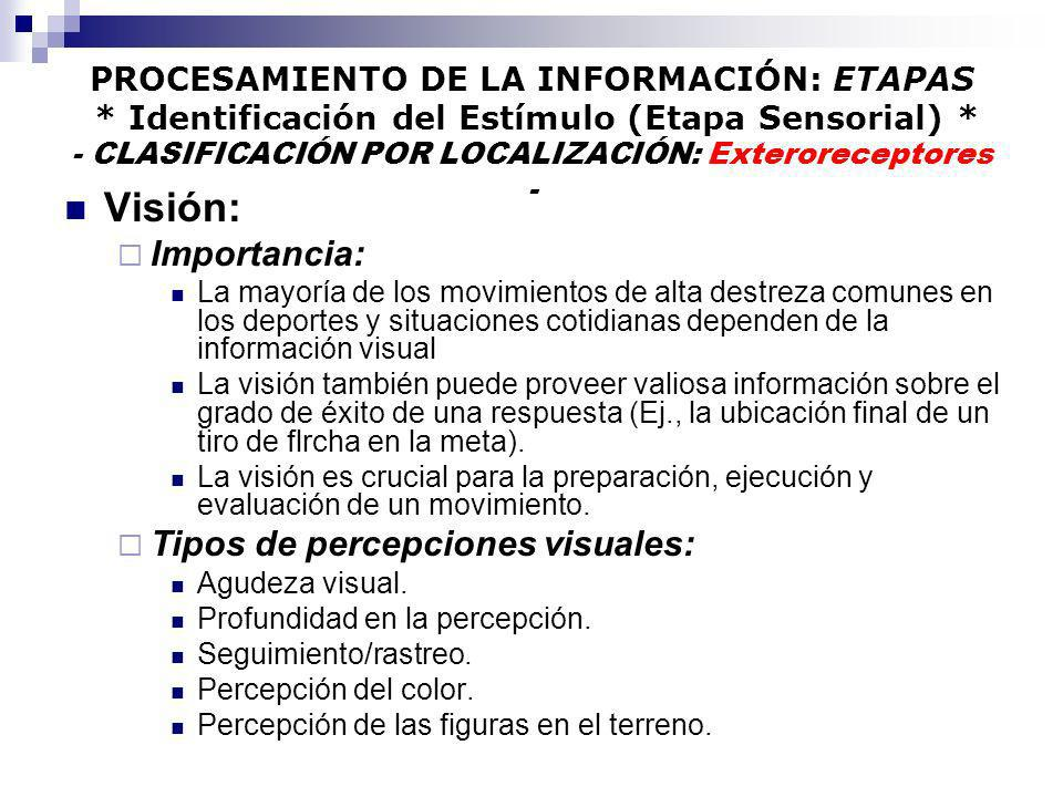 PROCESAMIENTO DE LA INFORMACIÓN: ETAPAS * Identificación del Estímulo (Etapa Sensorial) * - CLASIFICACIÓN POR LOCALIZACIÓN: Exteroreceptores - Visión: