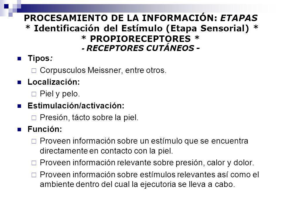 PROCESAMIENTO DE LA INFORMACIÓN: ETAPAS * Identificación del Estímulo (Etapa Sensorial) * * PROPIORECEPTORES * - RECEPTORES CUTÁNEOS - Tipos: Corpuscu