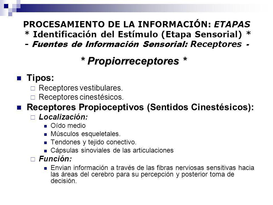 PROCESAMIENTO DE LA INFORMACIÓN: ETAPAS * Identificación del Estímulo (Etapa Sensorial) * - Fuentes de Información Sensorial: Receptores - Tipos: Rece