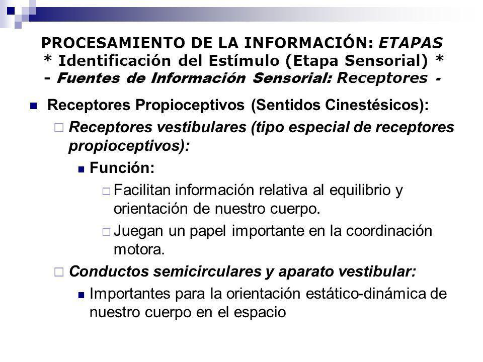 PROCESAMIENTO DE LA INFORMACIÓN: ETAPAS * Identificación del Estímulo (Etapa Sensorial) * - Fuentes de Información Sensorial: Receptores - Receptores