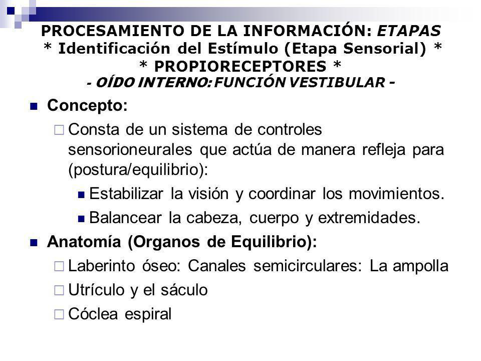 PROCESAMIENTO DE LA INFORMACIÓN: ETAPAS * Identificación del Estímulo (Etapa Sensorial) * * PROPIORECEPTORES * - OÍDO INTERNO: FUNCIÓN VESTIBULAR - Co