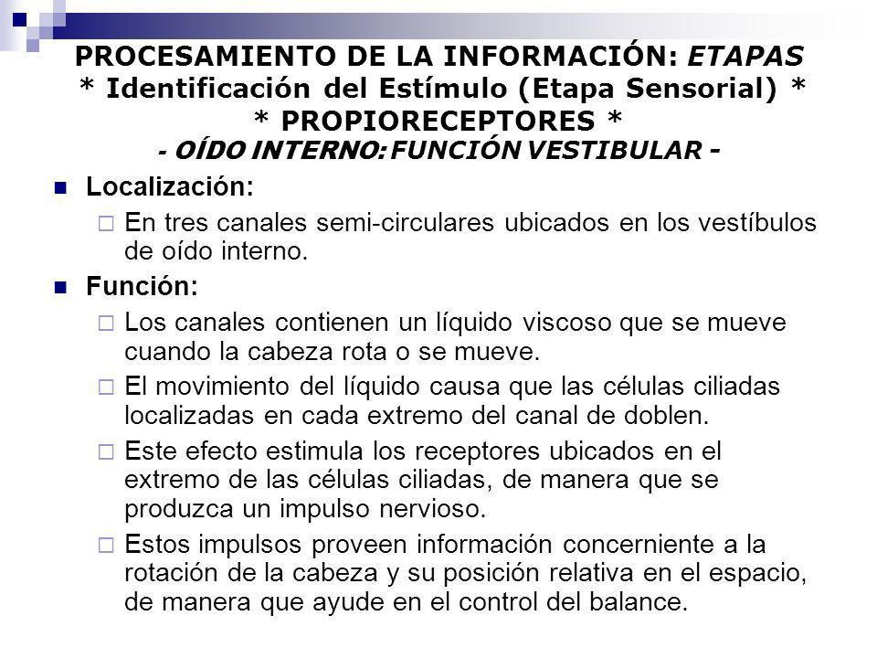 PROCESAMIENTO DE LA INFORMACIÓN: ETAPAS * Identificación del Estímulo (Etapa Sensorial) * * PROPIORECEPTORES * - OÍDO INTERNO: FUNCIÓN VESTIBULAR - Lo