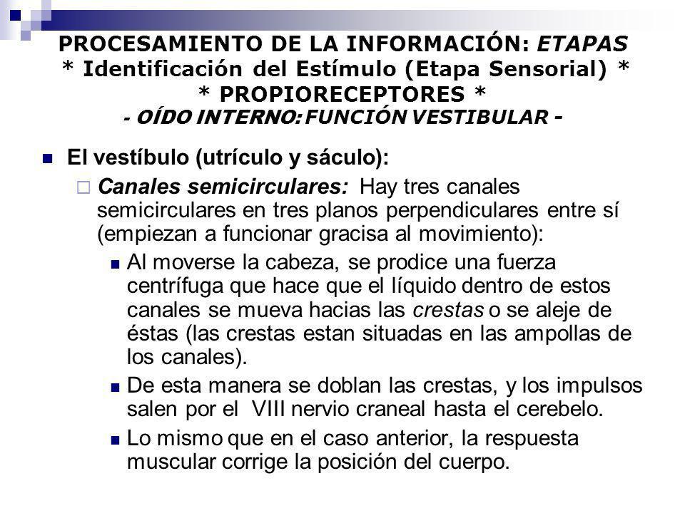 PROCESAMIENTO DE LA INFORMACIÓN: ETAPAS * Identificación del Estímulo (Etapa Sensorial) * * PROPIORECEPTORES * - OÍDO INTERNO: FUNCIÓN VESTIBULAR - El