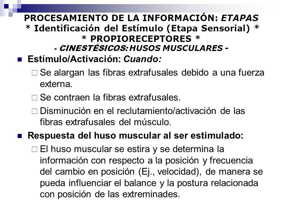 PROCESAMIENTO DE LA INFORMACIÓN: ETAPAS * Identificación del Estímulo (Etapa Sensorial) * * PROPIORECEPTORES * - CINESTÉSICOS: HUSOS MUSCULARES - Estí