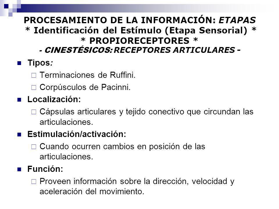 PROCESAMIENTO DE LA INFORMACIÓN: ETAPAS * Identificación del Estímulo (Etapa Sensorial) * * PROPIORECEPTORES * - CINESTÉSICOS: RECEPTORES ARTICULARES
