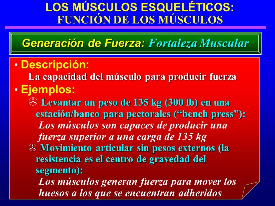LOS MÚSCULOS ESQUELÉTICOS: FUNCIÓN DE LOS MÚSCULOS Descripción: La capacidad del músculo para producir fuerza Ejemplos: Levantar un peso de 135 kg (30
