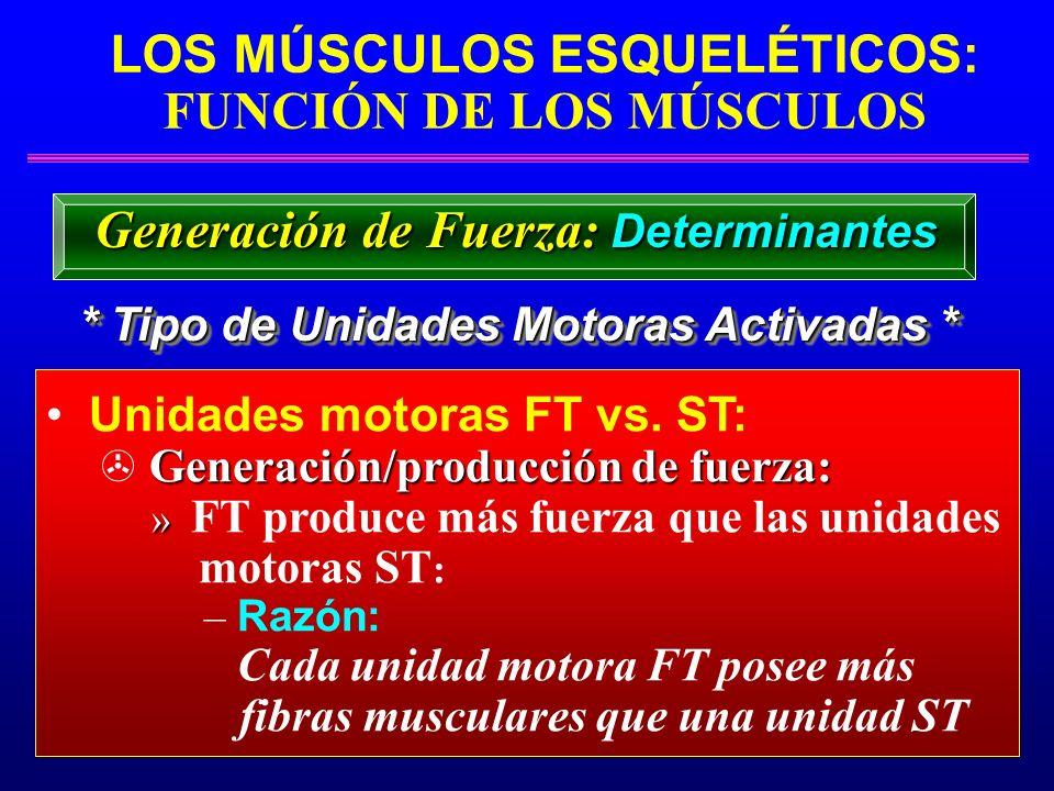 LOS MÚSCULOS ESQUELÉTICOS: FUNCIÓN DE LOS MÚSCULOS * Tipo de Unidades Motoras Activadas * Generación de Fuerza: Determinantes Unidades motoras FT vs.