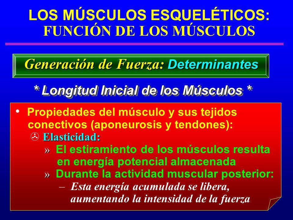 LOS MÚSCULOS ESQUELÉTICOS: FUNCIÓN DE LOS MÚSCULOS * Longitud Inicial de los Músculos * Generación de Fuerza: Determinantes Propiedades del músculo y