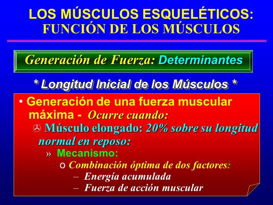 LOS MÚSCULOS ESQUELÉTICOS: FUNCIÓN DE LOS MÚSCULOS * Longitud Inicial de los Músculos * Generación de Fuerza: Determinantes Generación de una fuerza m