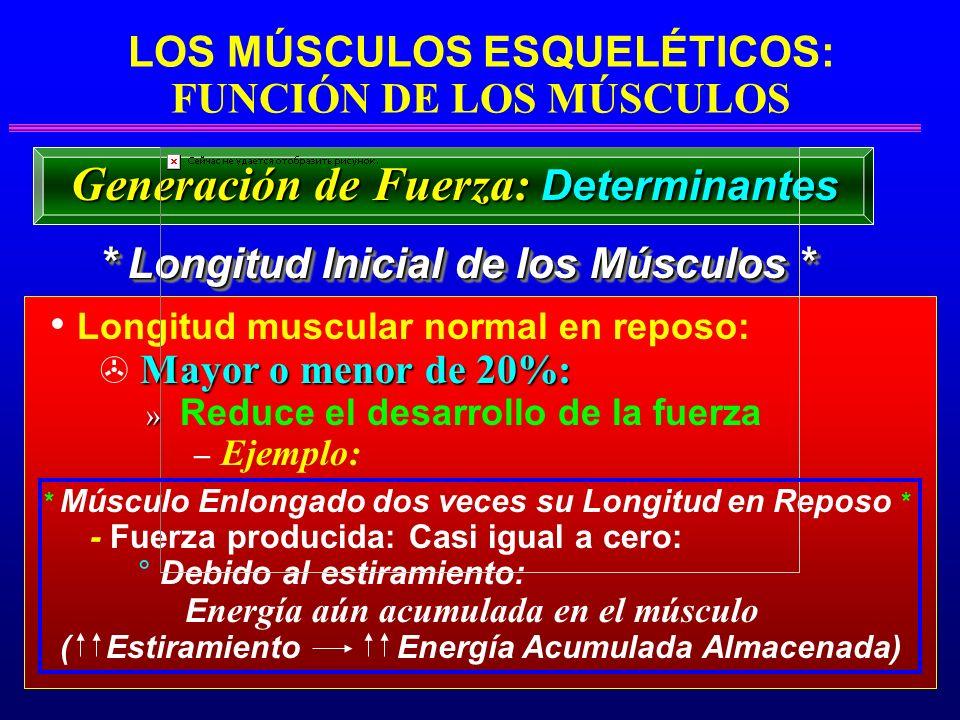 LOS MÚSCULOS ESQUELÉTICOS: FUNCIÓN DE LOS MÚSCULOS * Longitud Inicial de los Músculos * Generación de Fuerza: Determinantes Longitud muscular normal e