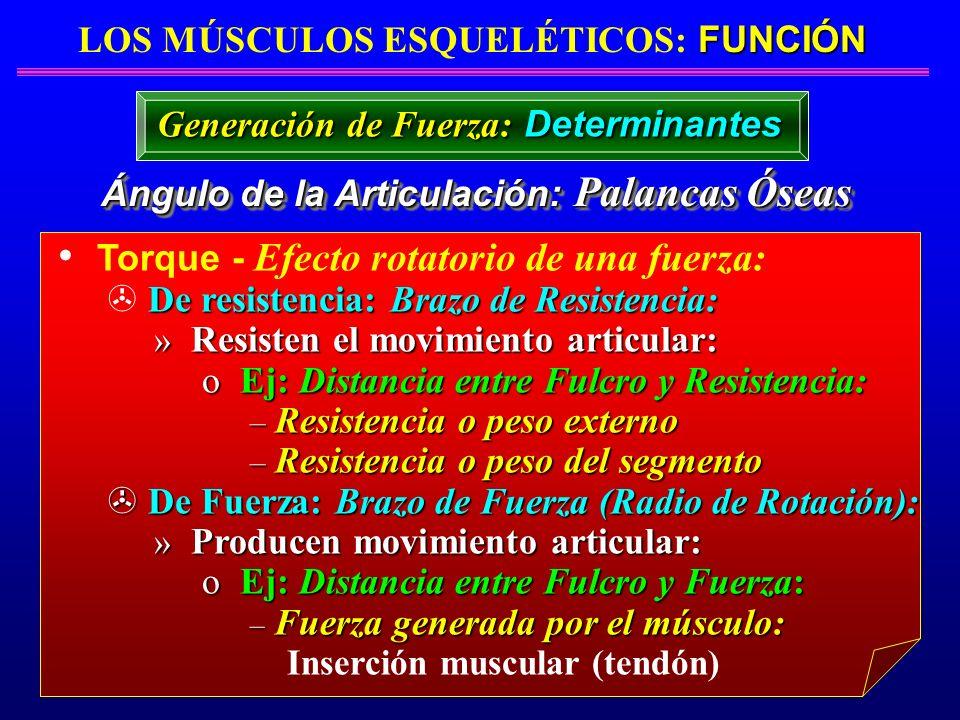 FUNCIÓN LOS MÚSCULOS ESQUELÉTICOS: FUNCIÓN Ángulo de la Articulación: Palancas Óseas Torque - Efecto rotatorio de una fuerza: De resistencia: Brazo de