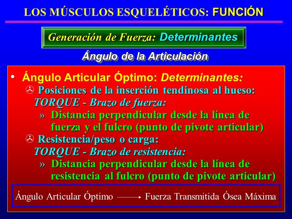 FUNCIÓN LOS MÚSCULOS ESQUELÉTICOS: FUNCIÓN Ángulo de la Articulación Ángulo Articular Óptimo: Determinantes : Posiciones de la inserción tendinosa al