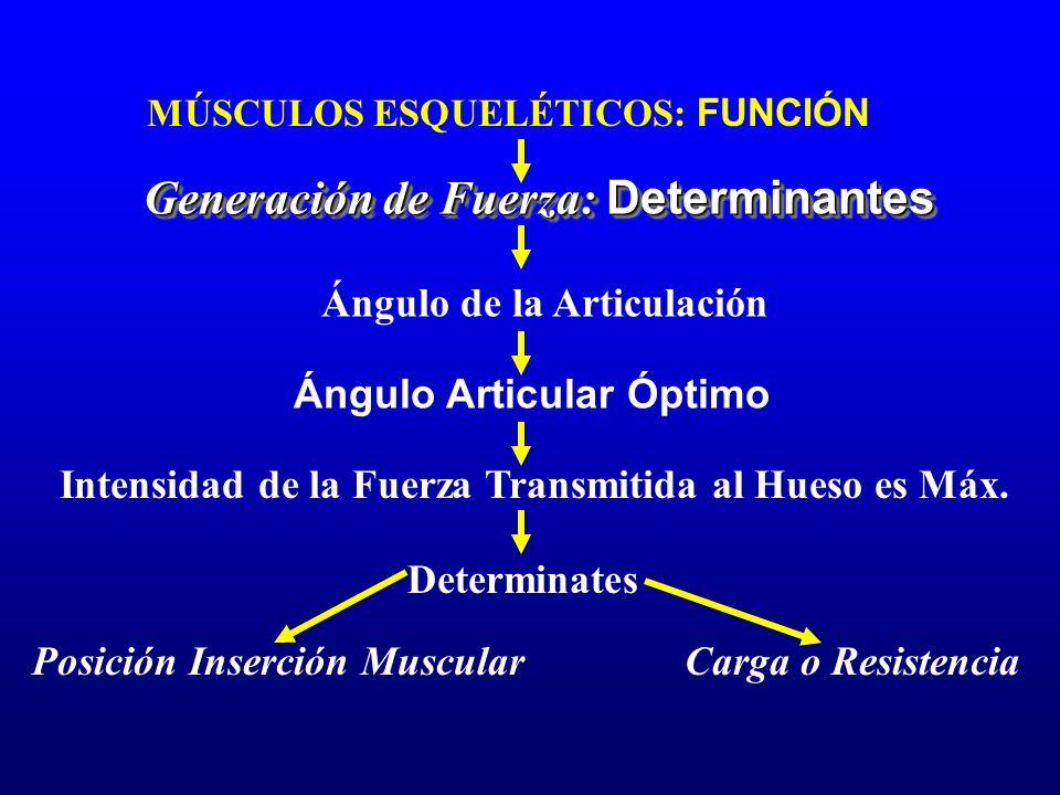 MÚSCULOS ESQUELÉTICOS: FUNCIÓN Generación de Fuerza: Determinantes Ángulo de la Articulación Ángulo Articular Óptimo Intensidad de la Fuerza Transmiti