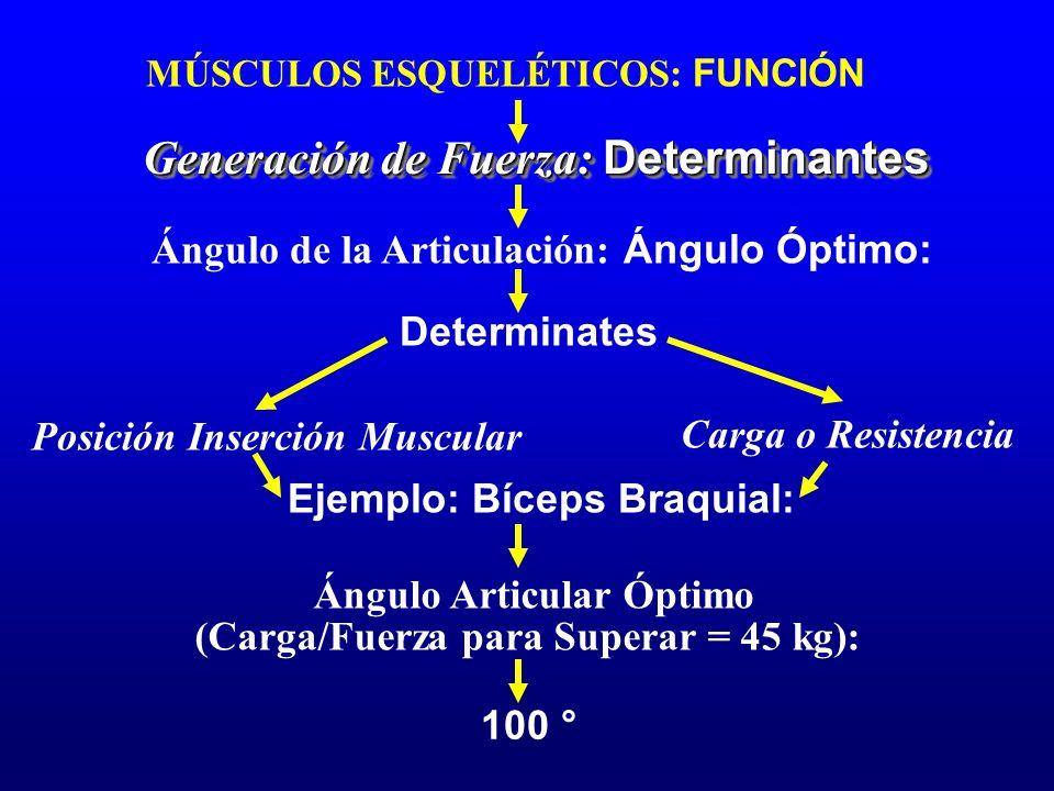 MÚSCULOS ESQUELÉTICOS: FUNCIÓN Generación de Fuerza: Determinantes Ángulo de la Articulación: Ángulo Óptimo: Determinates Posición Inserción Muscular